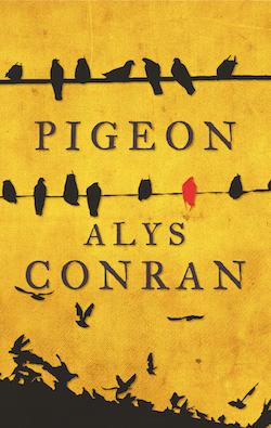 Alys Conran: Pigeon