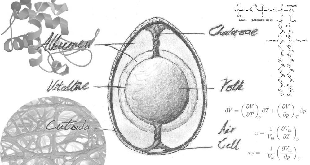 Artisaniaeth Eggs main image